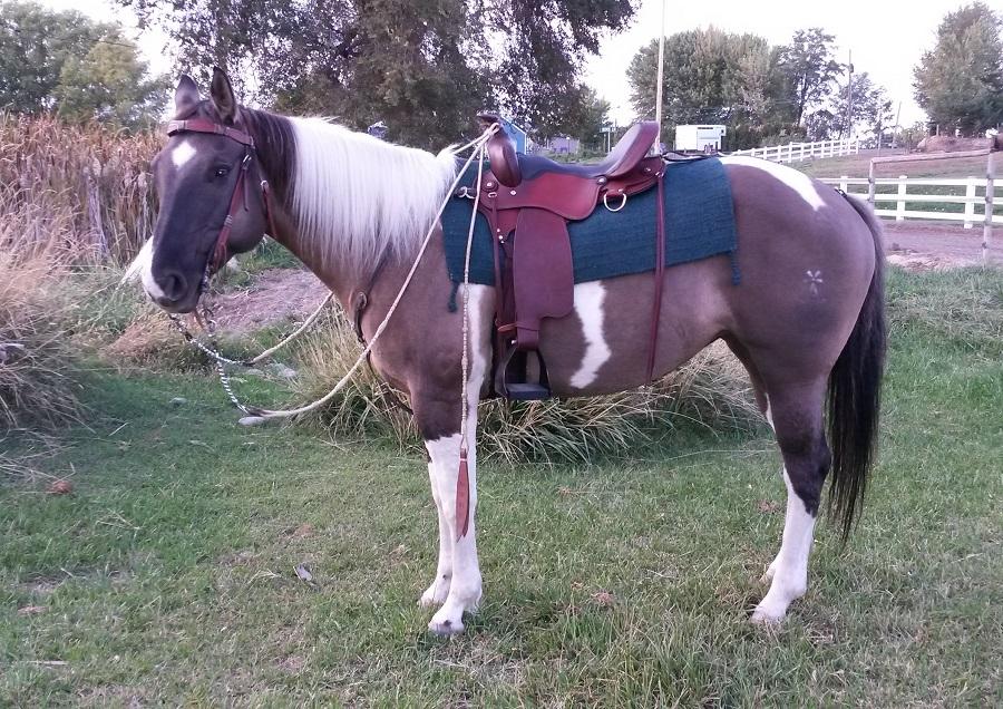 AmBHB Cowgirl